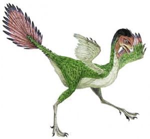 caudipteryx