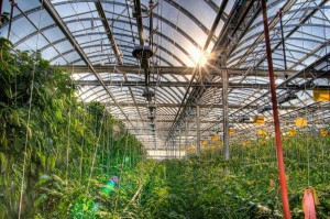 Des fermes biologiques secrètes pour les dirigeants chinois-Chinecroissance