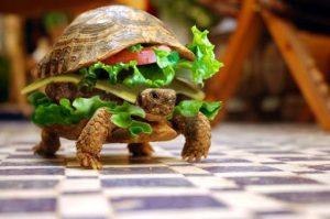 Un chinois tente de prendre avion avec sa tortue déguise en Hamburger-Chinecroissance